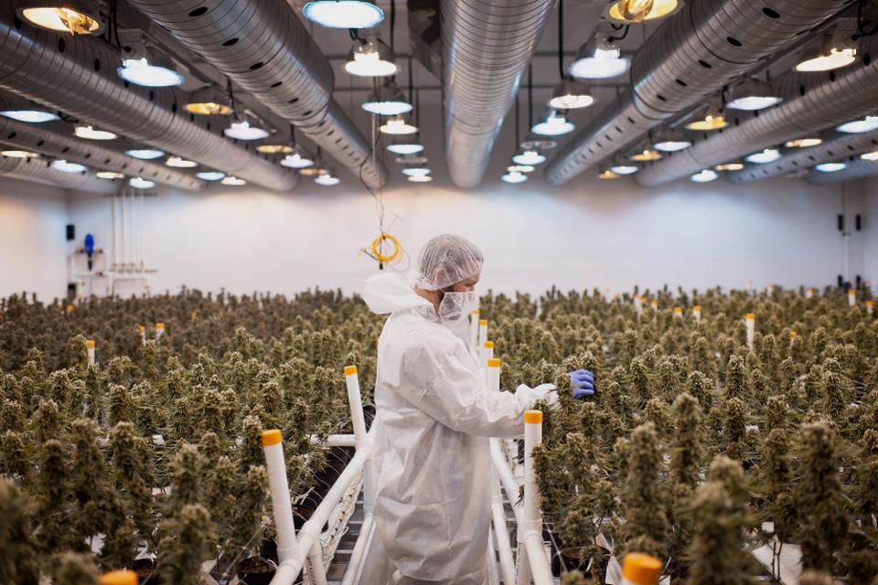Why The Canadian Marijuana Market Will Be Smaller Than Investors Think - The Canadian marijuana market is booming. But a new report suggests that the market has been overhyped. [Forbes]