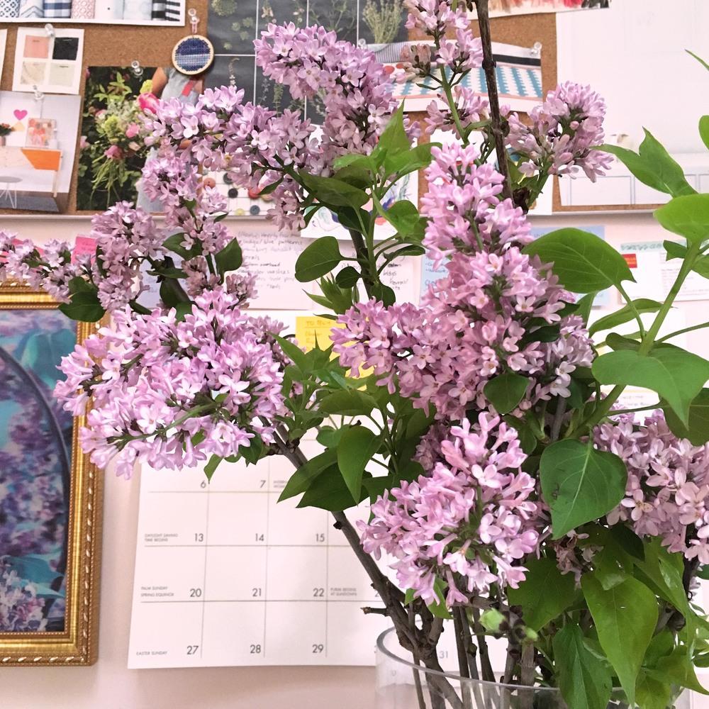 Studio flowers!