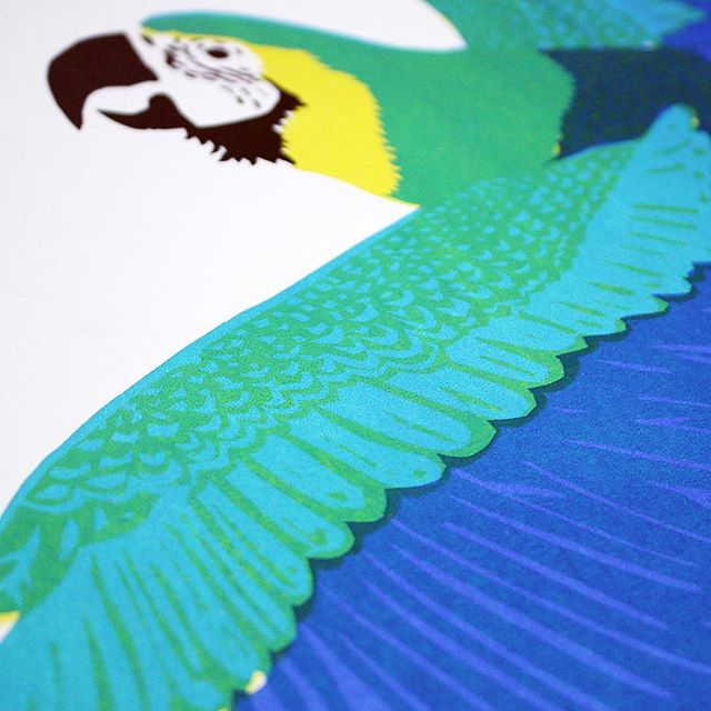 💚Wings and things.💙 I love how the layering turned out on this macaw screen print! Layering colors of transparent inks to get different shapes is one of my favorite parts of the screen printing process.🎨 . . . . #wolfjawpress #macawsofinstagram #macaw #birdsofinstagram #seekthesimplicity #liveauthentic #flashesofdelight #dscolor #printmaking #printspotters #homeinspo #westelm #pocketofmyhome #homeinthestudio #homedecor  #thatsdarling #creativityfound
