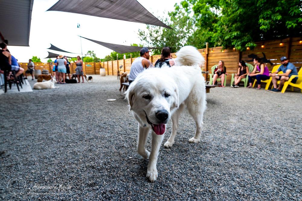 Bonnie-Photo-Romeros-Pup-Crawl-social-13.jpg