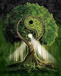 Tai Chi tree
