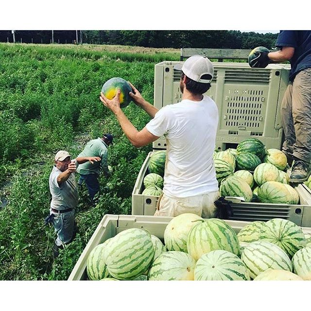 Just some good ol'fashioned #watermelon tossing @sangleefarms. How'd you think they got all way the way to Brooklyn anyways?