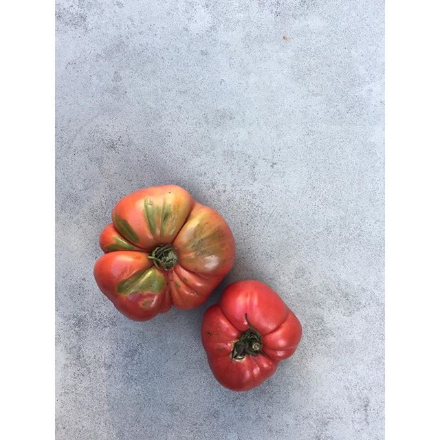 Cheers to more of these beautiful and oh-so-delicious tomatoes coming our way tomorrow!