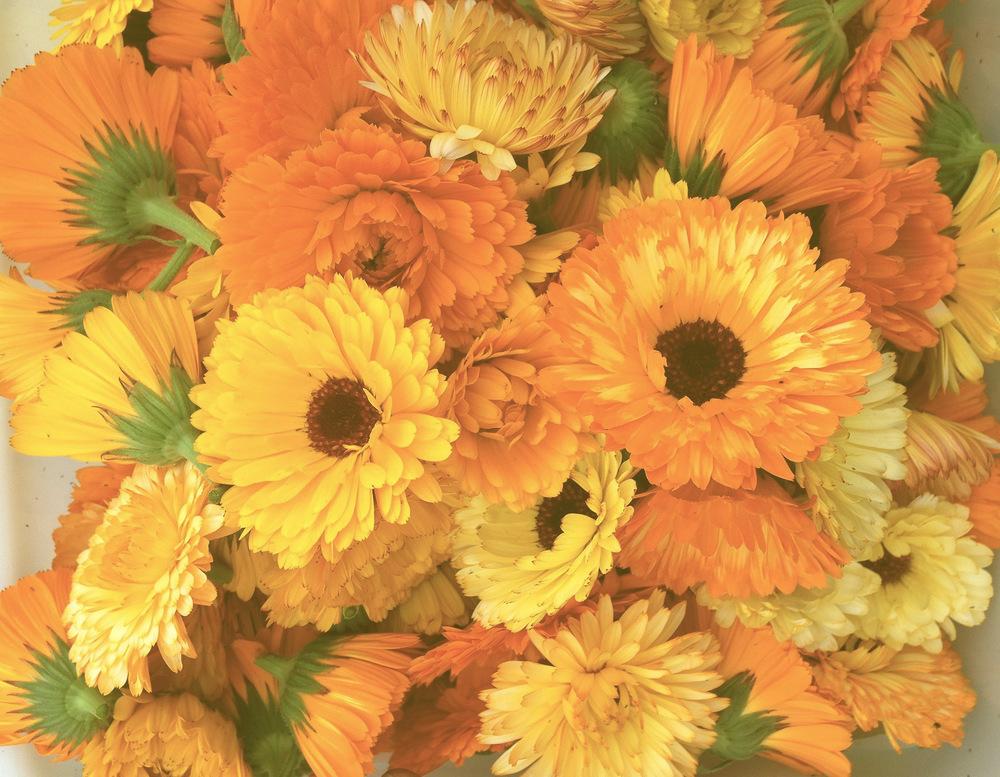 Sustainably raised produce, eggs, honey & flowers.