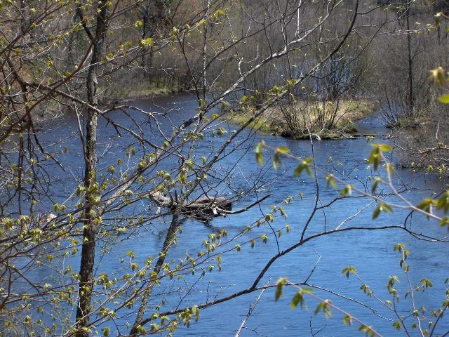 Rat River 002.jpg