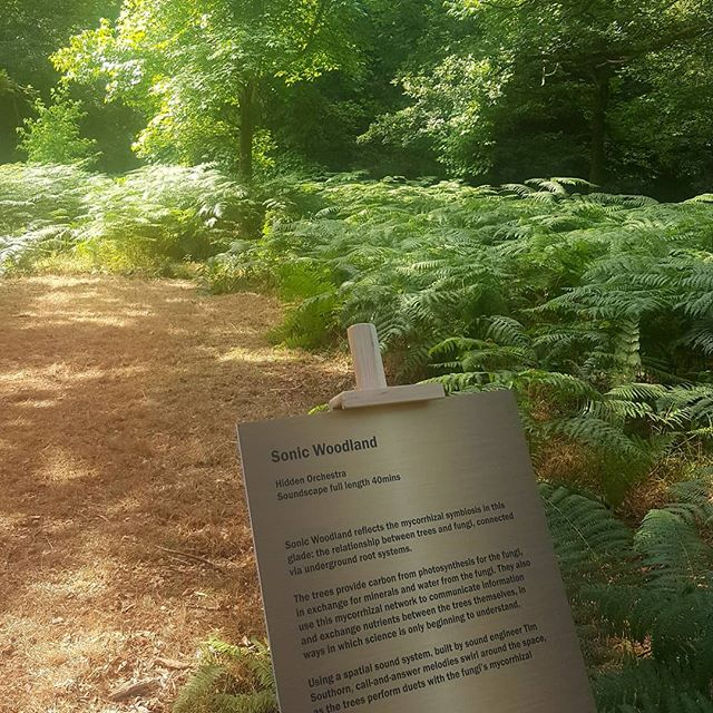 Sonic Woodland starts today as part of #thewonderproject... speakers hung from trees and buried in the ground send sound and music around a woodland glade at Kew Wakehurst