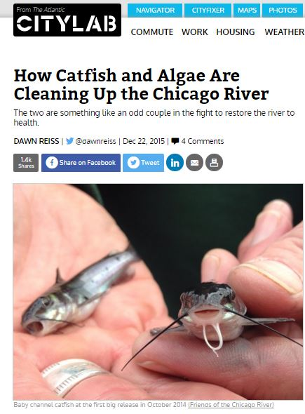How Catfish and Algae are Cleaning Up the Chicago River Dawn Reiss