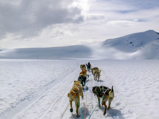 Dog sledding in Alaska.