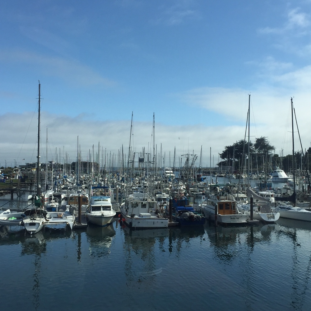 How pretty is the Santa Cruz harbor??