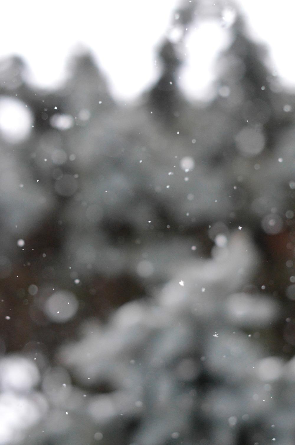 Snow Falling  (1 of 1).jpg