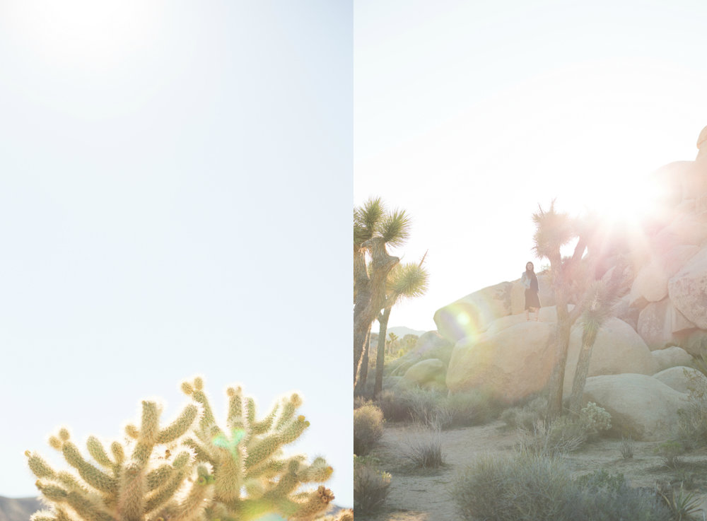 Joshua Tree Maternity Session.jpg