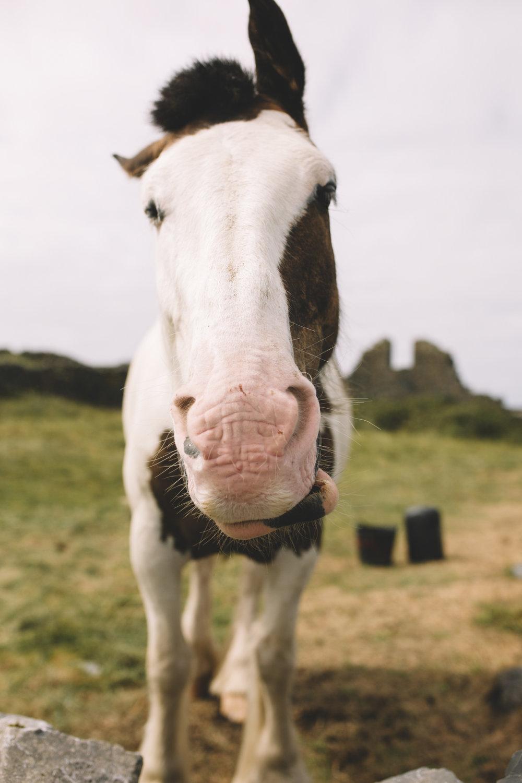10 Tear Anniversary Trip - Aran Island Inis Mor Inis Orr Ireland  (49 of 73).jpg