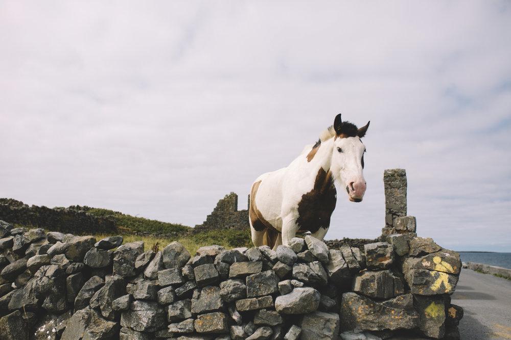 10 Tear Anniversary Trip - Aran Island Inis Mor Inis Orr Ireland  (50 of 73).jpg