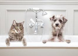 Get you muddy buddies all spruced up with our Spring Cleaning Spa Special! For just the price of a bath, your pampered pet will receive a bath, nail trim, ear cleaning, anal gland expression (dogs only) and routine comb out. Treat your pet to a Spa Day and save money!    Offer expires 5/31/18