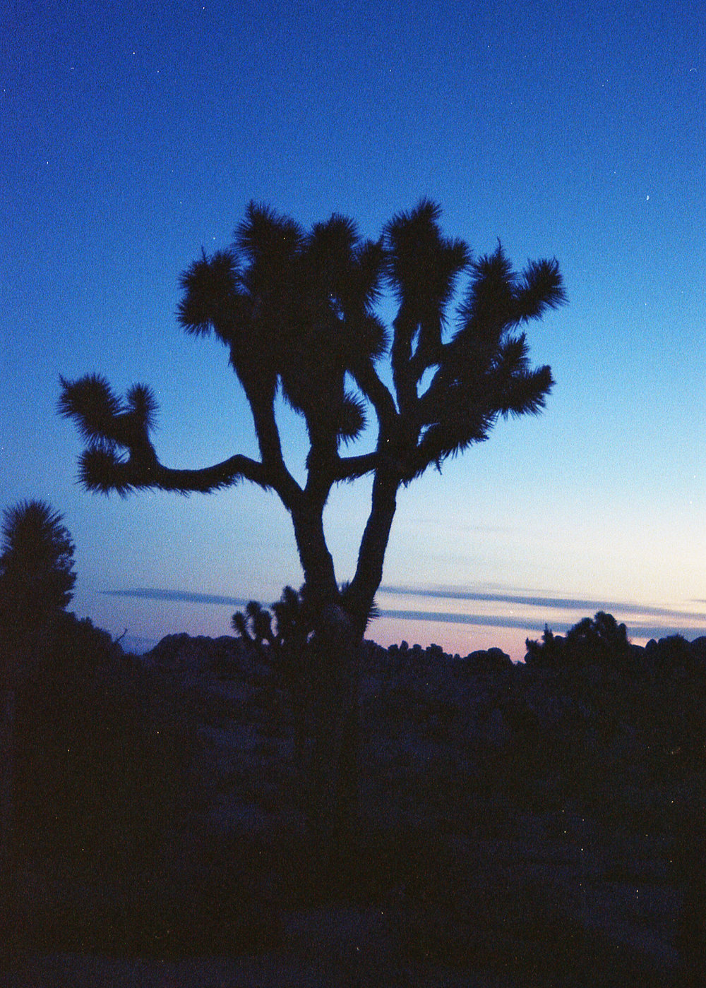 Inspired by my recent western film kick, Avrie and I lit out the first week of January, heading for the desert. My main goal was to soak up the vast land of shrubs and jack rabbits in Joshua Tree National Park. All summer long, Avrie and I watched cowboy flicks like  Tombstone, Lonesome Dove, Open Range, Dances With Wolves,  and the like. When I was a kid, I used to fight my dad over the remote in hopes to turn off his beloved black and white OG western films. At the time I hated it, but growing up around them I slowly learned to appreciate them. I've even seen a midget western from the 60s. All cowboys were 4 feet tall, and yes... they used miniature horses.