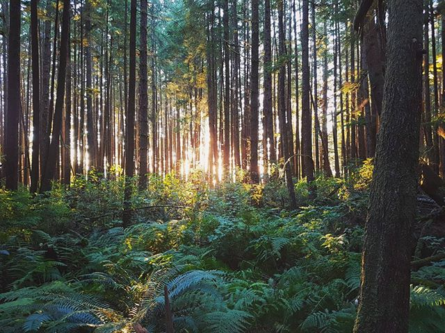 Those fern filled forests of fall. 💛💚🖤 _ . . . . #juandefucatrail #explorevanisle #westcoast