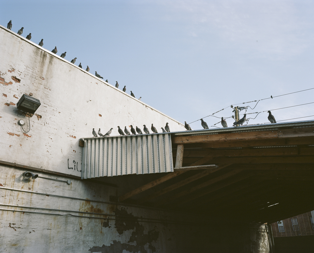 Gabe-Zimmer-Photography-The-Pigeons-Coop.jpg
