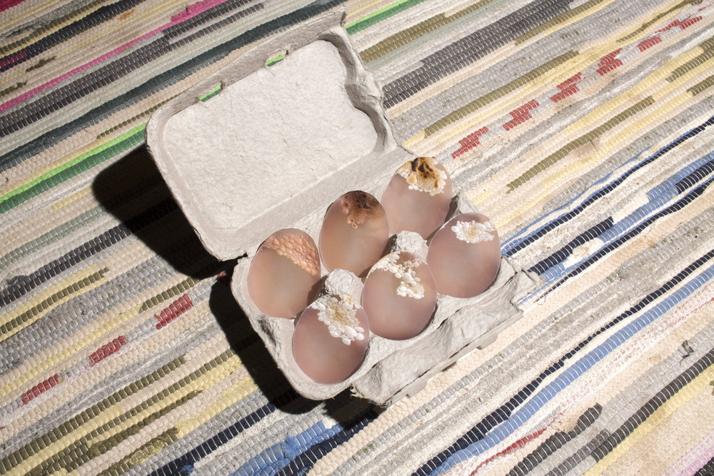burnt-eggs-on-rug-1.jpg