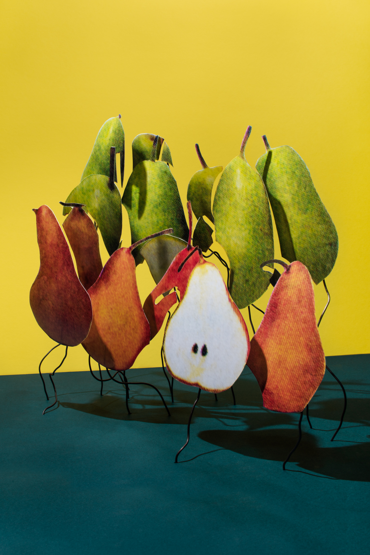 Northwest Bosc or Anjou Pears $1.49/LB
