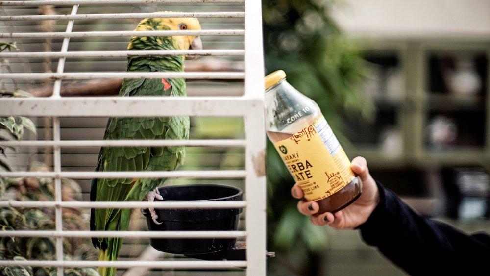 Owl House Creative - Guayaki Palm Oasis Campaign