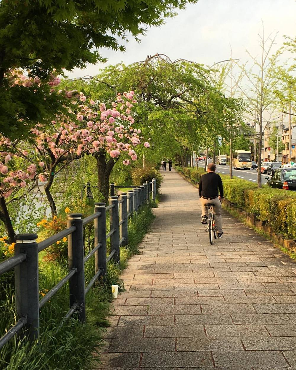 Bicycling along the Kyoto riverside. #travel #bicycling #kyoto #japan #livingthedream #serene #worldtraveler  (at Kiyomizu-Gojō Station)