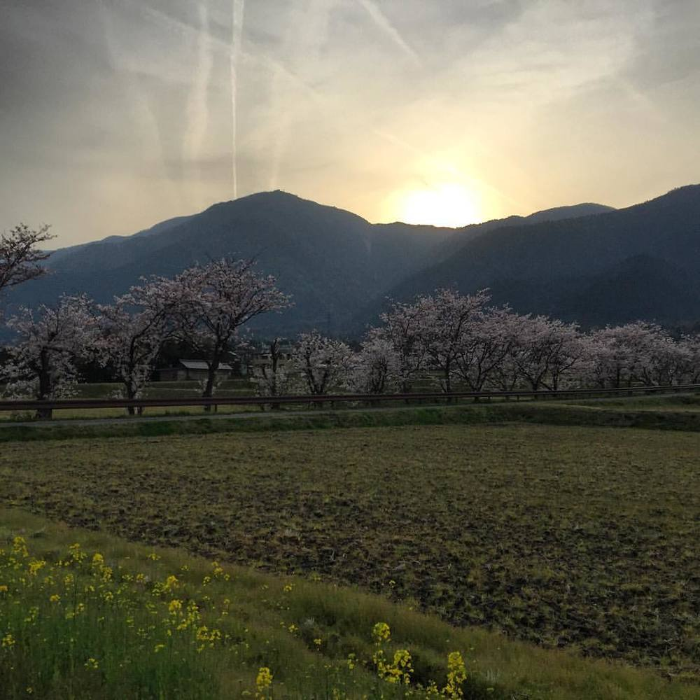 Stop it Japan, this is just too beautiful 😄 #japan #travel #wanderlust #livingthedream #sunset #sakura #ricefields (at Hira Station (Shiga))