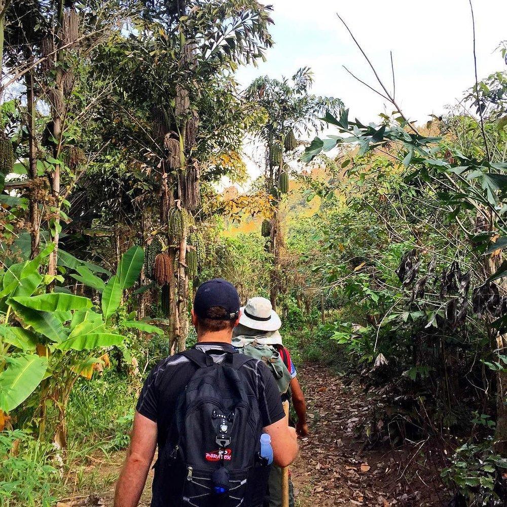 jungle_trek.jpg