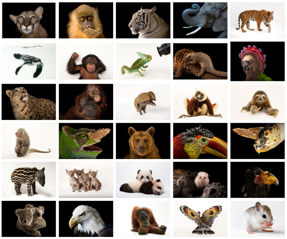 PHOTOGRAPHS FROM PHOTO ARK BY JOEL SARTORE
