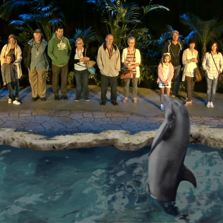 Augmented Reality Dolphin.png
