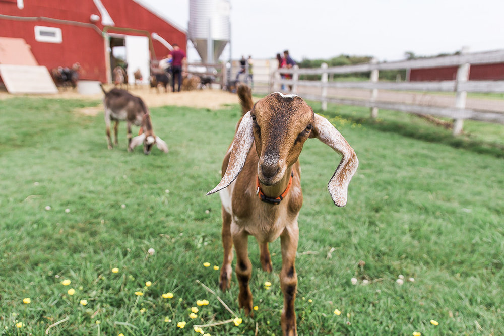 DANCING GOATS DAIRY    IS NOW PART OF THE LILLOOET CHEESERY FAMILY     Find Out More