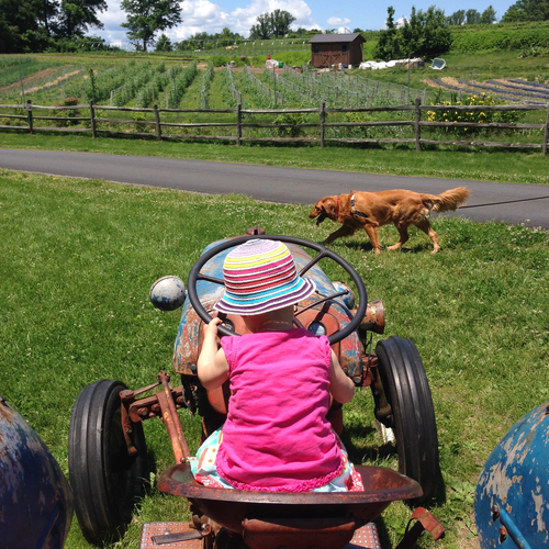 Vintage tractor at Stone Barns Center