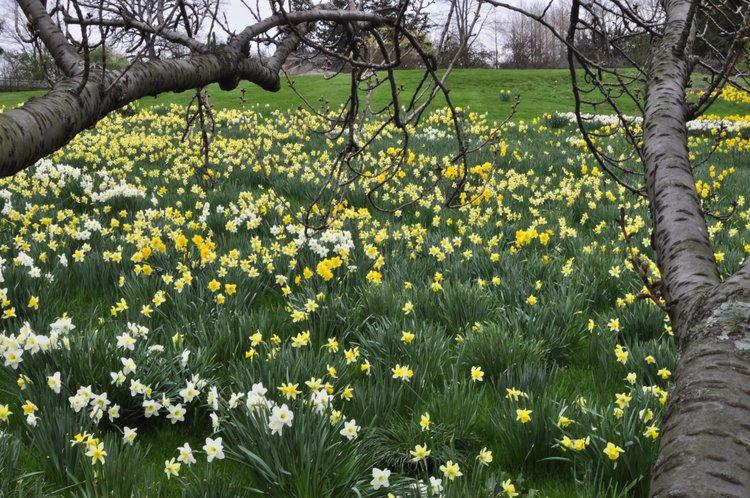The New York Botanical Garden by Rebecca Pitts - 06.jpg