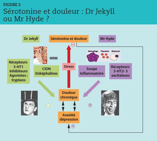 CIDN : contrôles inhibiteurs descendants induits par des stimulations nociceptives. NRM : noyau raphé médian localisé dans le tronc cérébral. La sérotonine a une action antalgique par la fixation sur les récepteurs 5-HT1. La sérotonine a une action proalgique par la fixation sur les récepteurs 5-HT2 et 3 et par sa contribution à la soupe inflammatoire. L'anxiété et la dépression sont associées à la douleur chronique, source de stress, d'épuisement des ressources de sérotonine, donc de renforcement de la comorbidité émotionnelle.