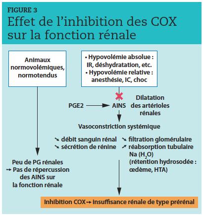 Les prostaglandines PGE2 dilatent les artérioles rénales essentiellement lors d'hypovolémie et préviennent ainsi l'ischémie. L'inhibition des COX par n'importe quel anti-inflammatoires non stéroïdiens (AINS) peut alors provoquer une vasoconstriction systémique à l'origine d'une insuffisance rénale de type prérénal. IR : insuffisance rénale ; IC : insuffisance cardiaque ; HTA : hypertension artérielle.