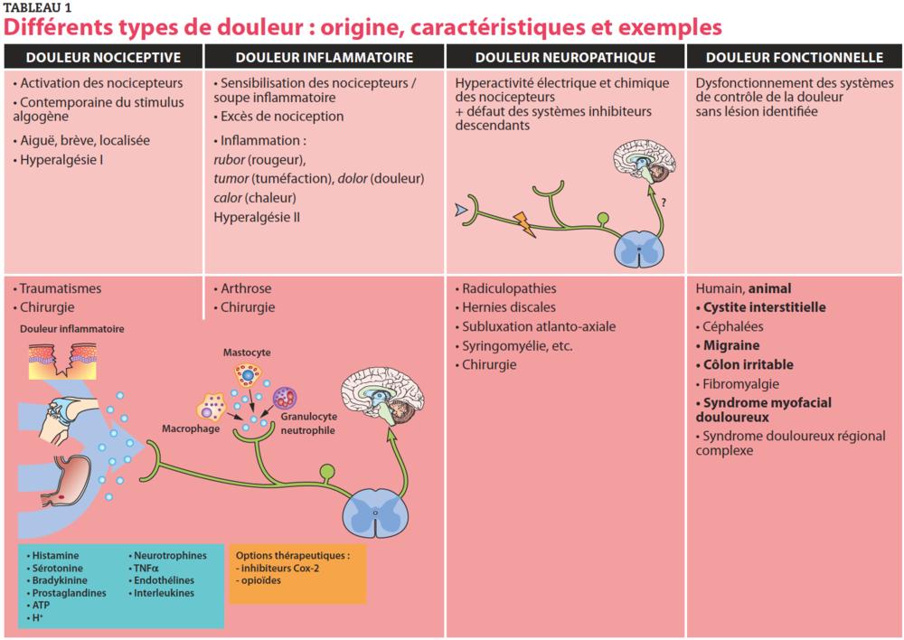 ATP : Adénosine triphosphate ; TNFα : facteur de nécrose tumorale α. D'après [19].
