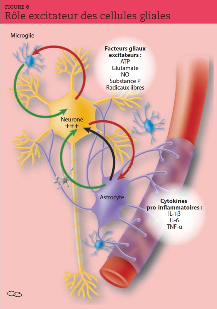 Les stimulations nociceptives répétées activent les cellules gliales via le glutamate et la substance P. Des facteurs gliaux excitateurs sont alors libérés et entretiennent par un système de boucles rétroactives l'hyperactivité neuronale. Les astrocytes stimulés produisent des cytokines pro-inflammatoires, prolongeant la douleur. ATP : adénosine triphosphate ; NO : monoxyde d'azote ; IL : interleukine ; TNF : facteur de croissance tumorale.