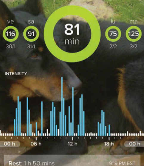 Visualisation sur l'application Whistle® (iOS) de l'activité quotidienne de la seconde chienne beauceron après un traitement anti- inflammatoire à base de firocoxib. Photos : T. POITTE