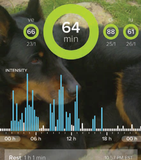 Visualisation sur l'application Whistle® (iOS) de l'activité quotidienne de la seconde chienne beauceron avant traitement.