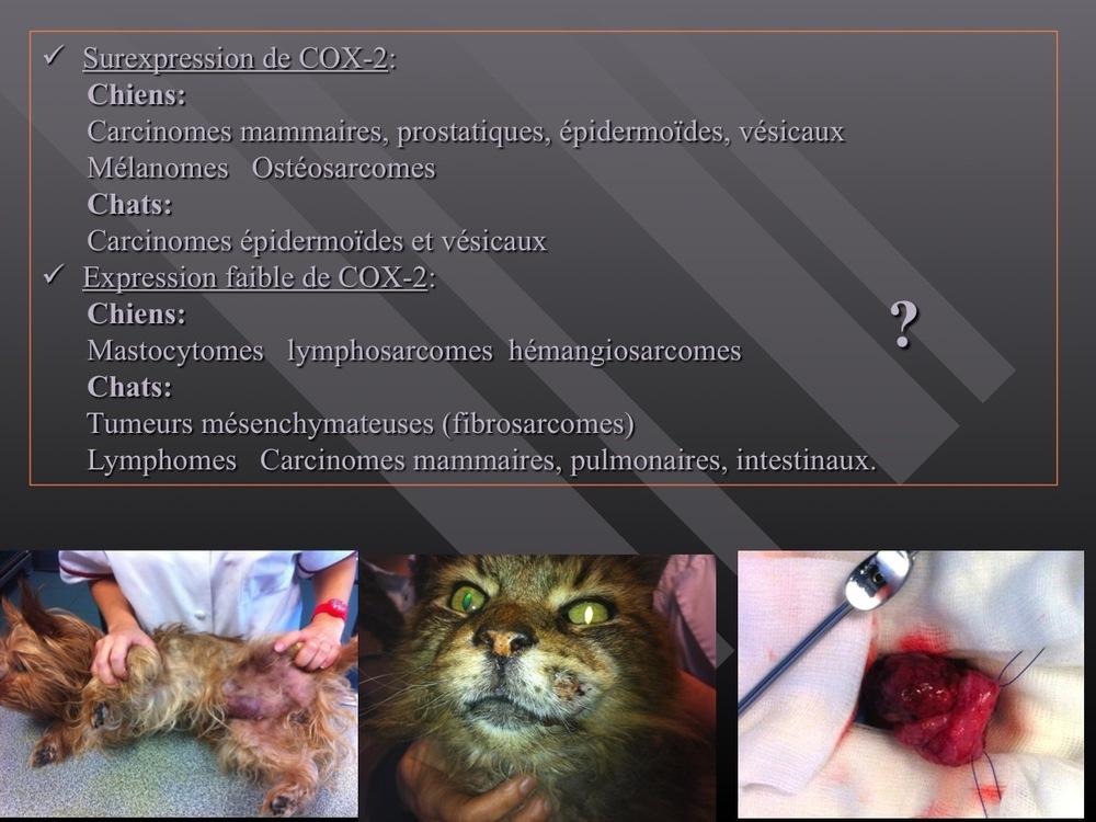 Diapositive21.jpg