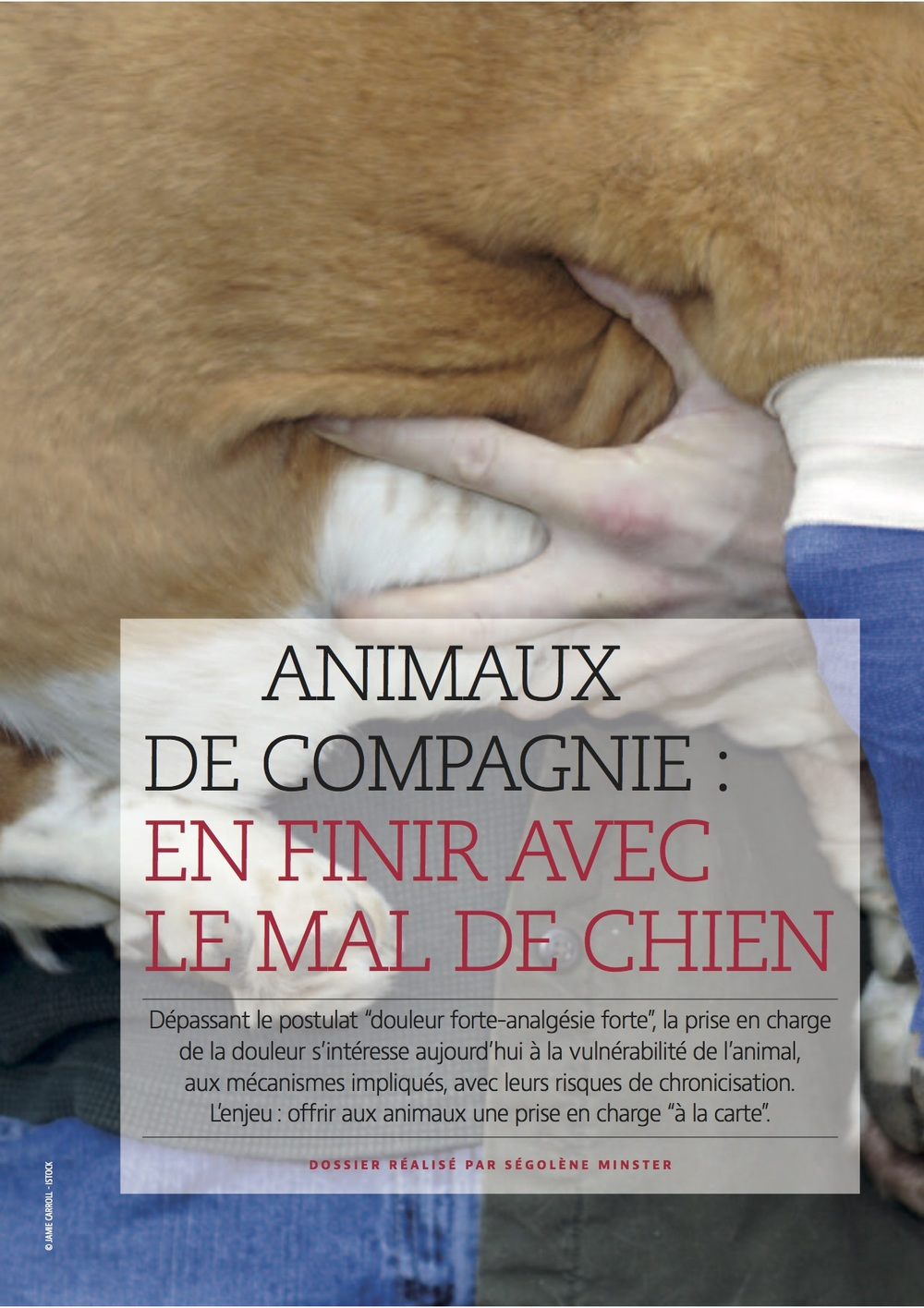 SV 24 juin 2016  Mal de chien2.jpg
