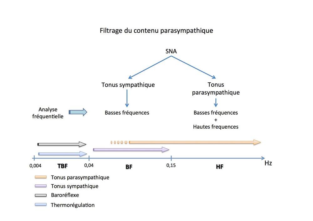 La douleur, la peur ou l'anxiété provoquent une diminution de la VFC en particulier dans le domaine HF (>0.15 Hz). Pour analyser uniquement les variations respiratoires, il faut donc appliquer des filtres afin de conserver la seule bande 0,15-0,5 Hz. Filtres Chiens : 0.12 - 0.4Hz Filtres Chats : 0.15 - 0.7Hz
