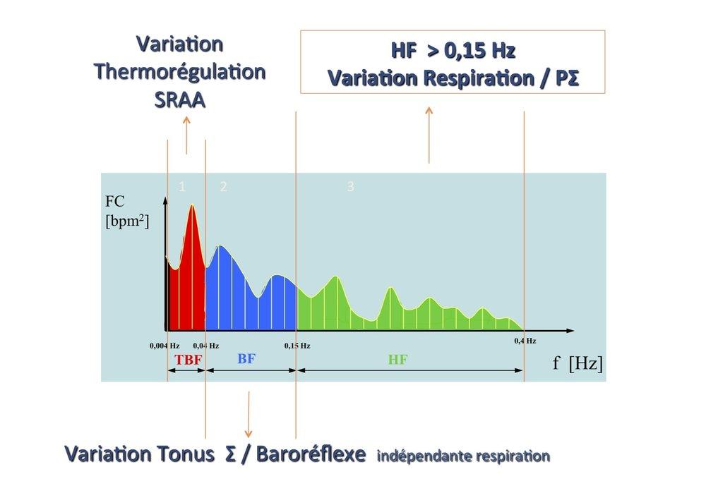 La transformation du temps en fréquence permet de réaliser une analyse spectrale par transformée de Fourier:   Les très basses fréquences (0,004-0,04 Hz) reflètent les variations de la FC dues à la thermorégulation et au Système Rénine Angiotensine   Les basses fréquences ( 0,04-0,15 Hz) reflètent les variations de la FC dues à la modulation de la balance Σ/PΣ par le baroréflexe.   Les hautes fréquences (0,15-0,4 Hz) reflètent les variations de la FC dues à l'arythmie respiratoire sinusale par le   P  Σ.