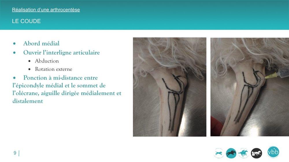 Diapositive09.jpg