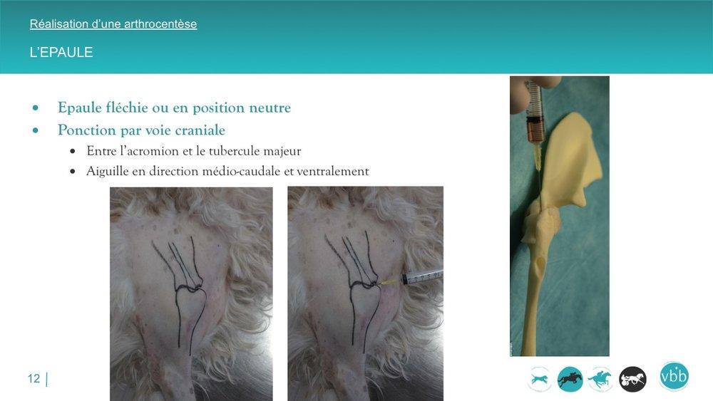 Diapositive12.jpg