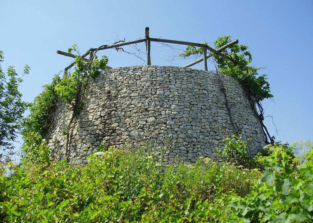 Watchtower and vineyard