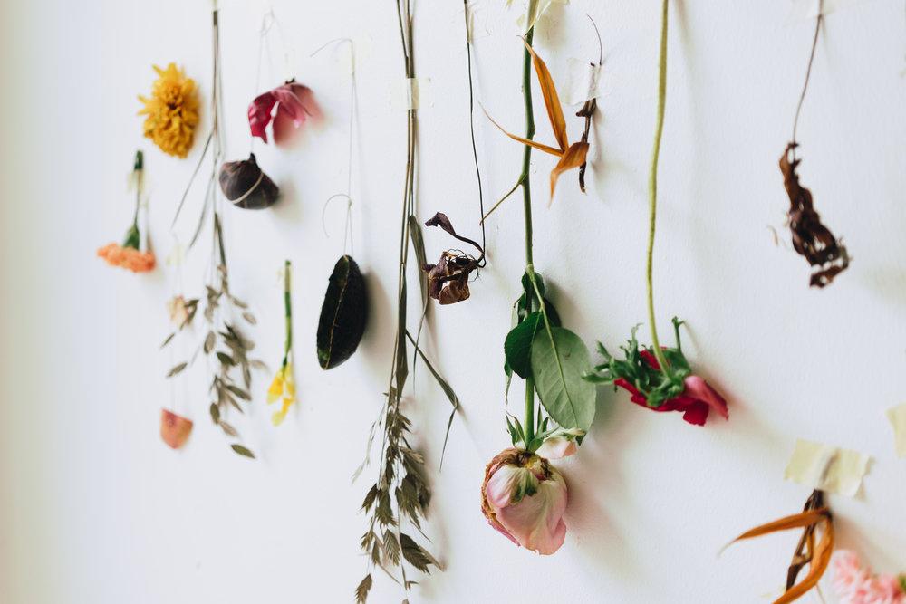 Plant Matter