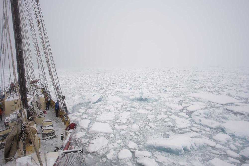 Nick-Cobbing-Noorderlicht-Arctic-sailing-ship-02.jpg