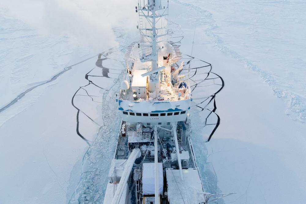 Lance amongst sea ice
