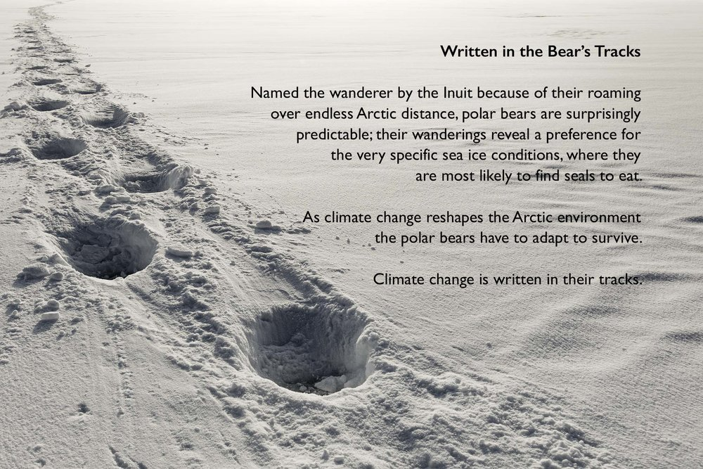 title image with type for polar bear gallery