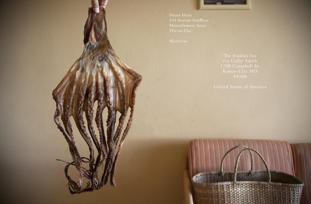 octopus postcard.jpg